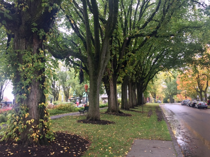 Elm trees.jpg