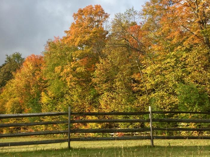 Fall wayside.jpg