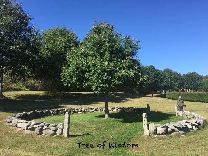 Tree of Wisdom.JPG