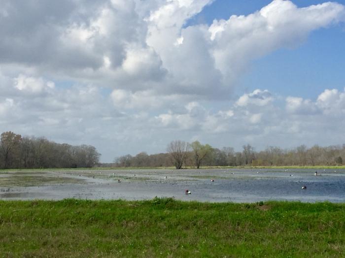 Crawfish fields.jpg